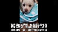 窃宫系列特殊小组 27 强烈推荐无辜的小狗