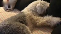 7部曲 可爱的小脏狗