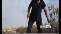 【拍客】80老大娘用镰刀收割小麦
