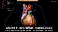 初识心脏! _循环系统生理学