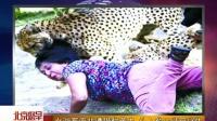 女游客南非遭猎豹袭击 头入豹口装死逃生