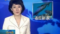 山东卫视:四条花鲸海洋极地世界安家落户