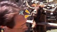 小漠集锦第十四期:风骚走位火影劫再现江湖