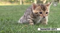 2016年最萌的29个小猫短片,喵星人搞笑视频集锦_超清