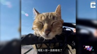 《美骑快讯》第253期 骑车捡到猫 男子带着她环游世界