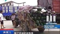 外地菜抢占市场本地菜难突围....拍摄:黄富昌 制作: 黄富昌