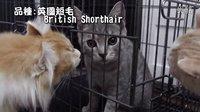 Hay&Pet - 新成员加入-荔枝! (feat.提子,菠萝仔)
