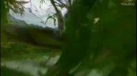 无人机炸机视频 无人机航拍倒退撞树差点炸机