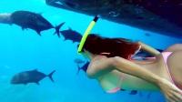 炎炎夏日, 国外妹子潜水带你观赏美丽的海底世界