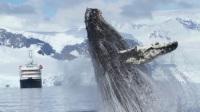 与夸克去南极:南极半岛鲸鱼的视觉盛宴