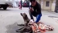 受伤狗的救助