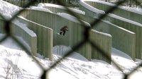 滑雪板 | 8 Miles Life - VACAY