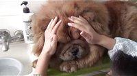 【萌犬仁球】狗狗如何表达它的爱?