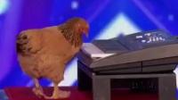 母鸡在美国达人秀节目弹琴