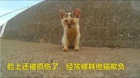 窃宫系列特殊小组 45 瞎眼猫咪得到救助