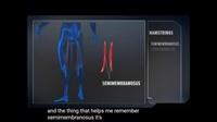 腿部解剖学与训练方法 Built by Science