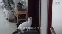 身怀绝技的猫咪——妞妞开门