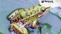 小学藏语文一年级下册 井底之蛙