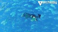 自由潜水毒视频系列 - Alchemy Experience