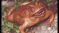 地球上最恐怖真实的生物画面