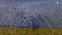 【新世界-Media】美丽的瞬间 自然-风景-动物-极限运动 Beautiful