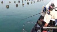 东山岛海钓爵克 黄鲷