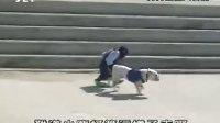 猩猩狗狗之找松茸买鞋游乐园