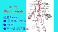 中山大学人体解剖学36课 03