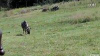 动物王国之乞力马扎罗山徒步旅行 Kilimanjaro Safaris at Animal Kingdom