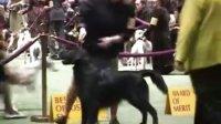 【平毛巡回犬】