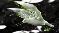 《海鸥》--翁倩玉演唱