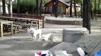 与狗狗一起的日子2