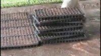 奶油生菜的大棚栽培技术