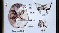 中国医科大学 系统解剖学 02
