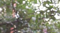 《蓝石榴》小孩现实中的梦——四川音乐学院