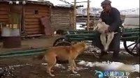 印象蒙古(十)猎人记忆