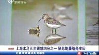 上海水鸟五年锐减四分之一 栖息地萎缩是主因 110402 新闻报道