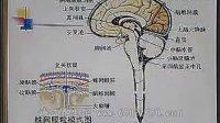《人体解剖学(系统解剖学)》视频讲座——第50讲(共50讲)