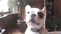 爆笑狗狗急得都说话了,那东西是俺滴,还给俺.