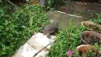 2011.05.22:我家乌龟的录像
