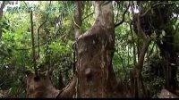 海南呀诺达雨林文化旅游区宣传片