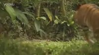 公益广告片:可持续发展(森林)- 不倒森林的声音
