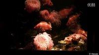 美国海洋世界的三个水族馆 3 Aquariums at SeaWorld USA