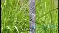 人教版语文小学二册 第2课 春雨的色彩 情境朗读
