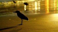 海滩上的鸟