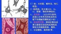 畜禽解剖及胚胎学19-20
