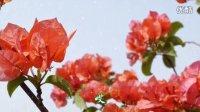 花儿为什么这样红