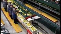 苹果自动包装贴标生产线