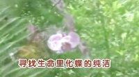 燕尾蝶-燕尾蝶
