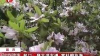 祁门:登大洪古道 赏杜娟花海  120422 安徽新闻联播